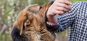 What Kind Of Lawyer Do You Need For A Dog Bite Injury In Minnesota?